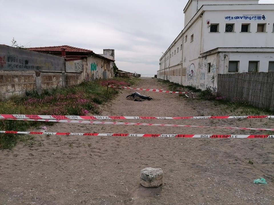 Fregene: Rimossa oggi la balenottera trovata morta sulla spiaggia 1